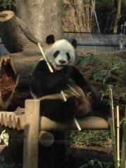 アントニオ小猪木 公式ブログ/パンダおまけ 画像1