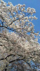 アントニオ小猪木 公式ブログ/春のポカポカ陽気 画像1