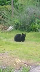 アントニオ小猪木 公式ブログ/同じエリアに黒猫 画像1