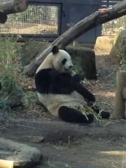 アントニオ小猪木 公式ブログ/快気に上野動物園へ! 画像1