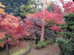 アントニオ小猪木 公式ブログ/喜多院の紅葉写真 画像1