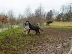 アントニオ小猪木 公式ブログ/ベルサイユの馬たち 画像1