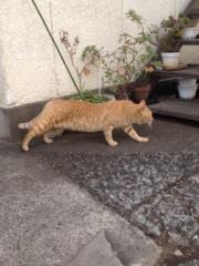 アントニオ小猪木 公式ブログ/トラ猫に近付いてみると 画像1