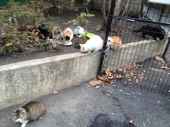 アントニオ小猪木 公式ブログ/沢山のネコ 画像1