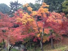アントニオ小猪木 公式ブログ/川越喜多院の紅葉 画像1