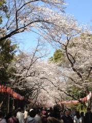 アントニオ小猪木 公式ブログ/上野と桜と青い空 画像1