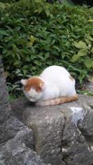 アントニオ小猪木 公式ブログ/首里城の猫 画像1