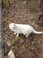 アントニオ小猪木 公式ブログ/のら猫のしっぽ 画像1
