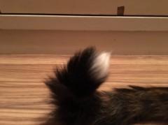 アントニオ小猪木 公式ブログ/尻尾の毛も生え揃ってきたね! 画像1