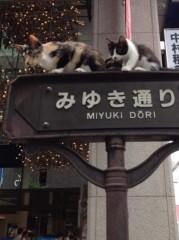 アントニオ小猪木 公式ブログ/銀座のこんなとこにネコ! 画像1