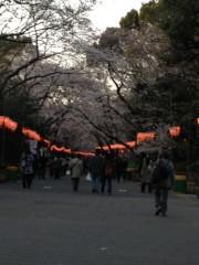 アントニオ小猪木 公式ブログ/夕暮れの桜 画像1