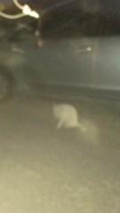 アントニオ小猪木 公式ブログ/冬に久々の白ネコ 画像1
