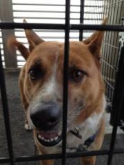 アントニオ小猪木 公式ブログ/井上病院の犬のUP 画像1