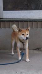 アントニオ小猪木 公式ブログ/土浦の柴犬 画像1