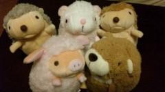 アントニオ小猪木 公式ブログ/ゲーセン5匹ゲット 画像1