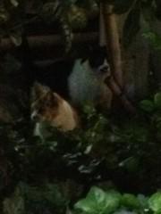 アントニオ小猪木 公式ブログ/しげみの仲良しネコ 画像1