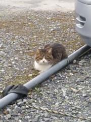 アントニオ小猪木 公式ブログ/いつもの猫 画像1