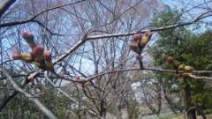 アントニオ小猪木 公式ブログ/名古屋は桜もうすぐ!? 画像1