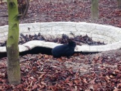 アントニオ小猪木 公式ブログ/ベルサイユの野うさぎ 画像1