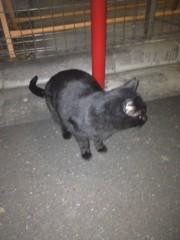 アントニオ小猪木 公式ブログ/夜の黒ねこ 画像1
