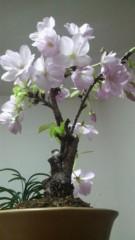 Kimeru 公式ブログ/桜 画像1