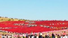 川村綾 公式ブログ/ひたち海浜公園 コキア紅葉 画像2