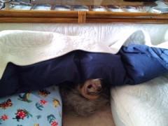 川村綾 公式ブログ/コタツ犬 画像1