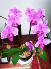 川村綾 公式ブログ/紫色のO-O-OOO 画像1