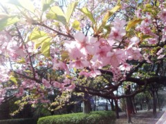 川村綾 公式ブログ/今年は早〜い!! 画像1