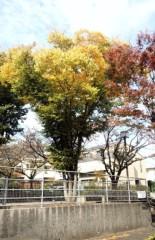 川村綾 公式ブログ/お散歩 画像1