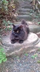 岡本夏生 公式ブログ/金色の目をした夢先案内人の猫 画像2