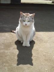 岡本夏生 公式ブログ/やっぱり猫が好き 画像1