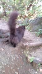 岡本夏生 公式ブログ/金色の目をした夢先案内人の猫 画像3
