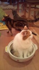 岡本夏生 公式ブログ/53猫カフェデビューでこにゃにゃちわ 画像3