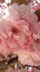 向井理 公式ブログ/春 画像1