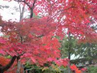 保阪尚希 公式ブログ/あぶり餅。 画像3