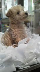 フェアリーズ 公式ブログ/井上理香子「子犬とレコーディングとパプりかことまひろと渋谷とわぁぁ←」 画像2