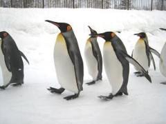 磯部弘 公式ブログ/SONYビル「旭山動物園3D」 画像1