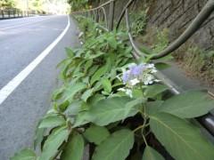 磯部弘 公式ブログ/自転車で行く小旅行Part1 画像1