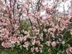 磯部弘 公式ブログ/春です 画像1