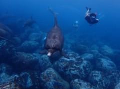 磯部弘 公式ブログ/御蔵島で野生のイルカと泳ぐ 画像2