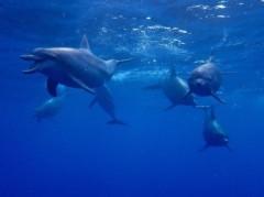 磯部弘 公式ブログ/御蔵島で野生のイルカと泳ぐ 画像1