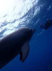 磯部弘 公式ブログ/御蔵島で野生のイルカと泳ぐ 画像3