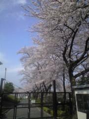 浅香・ジェット(覆面☆食堂) 公式ブログ/よみうりランドの桜 画像2