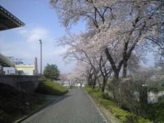 浅香・ジェット(覆面☆食堂) 公式ブログ/よみうりランドの桜 画像1