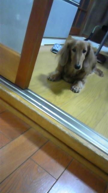 愛犬(pq* ´ω`)+ 。