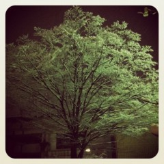 梓未來 公式ブログ/東京帰ってきました 画像1