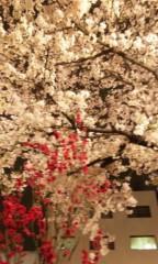 梓未來 公式ブログ/夜桜 画像1