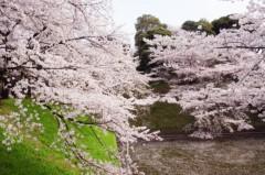 梓未來 公式ブログ/お花見してきました☆ 画像3