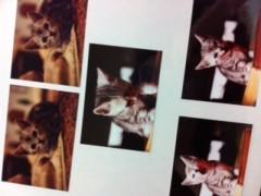 梓未來 公式ブログ/優しい猫 画像1